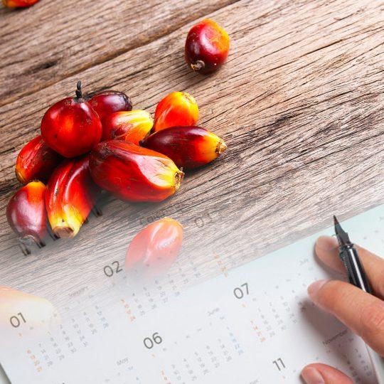 programme-calendar
